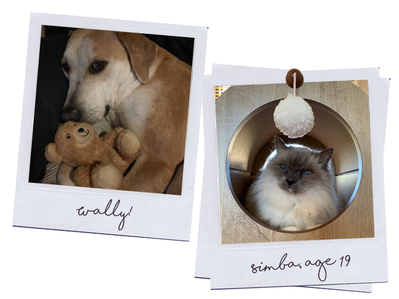 Wally & Simba | RSPCA Cupcake Day | Discover Queensland