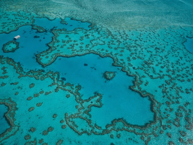 Aerial View of the Great Barrier Reef | Tropical Trails