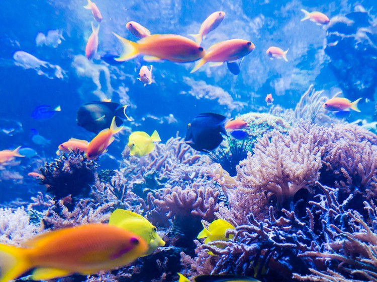 Coral Reef | Tropical Reef & Rainforest