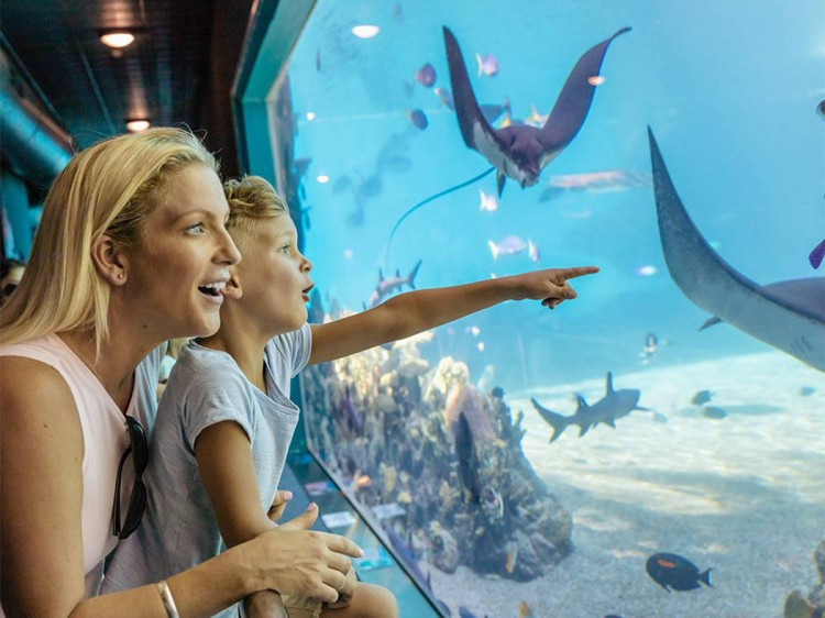Sea World | Gold Coast Family Stay & Play  | Discover Queensland